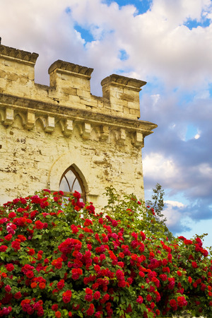 The red rose behind old castle and cloudy sky photo