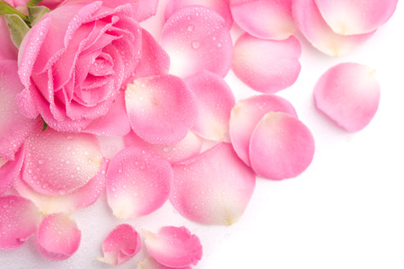 pinks: Close up of the pink rose petails Stock Photo