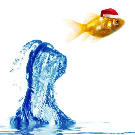 Close up view of the christmas gold fish jumping over water Stock Photo