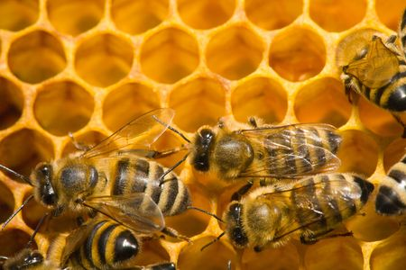 Close up view of the bees on honey photo