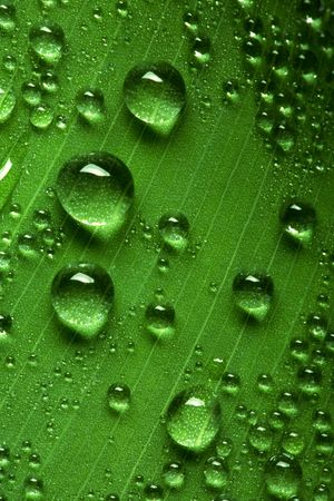 refreshed: Close up view of the water drops background