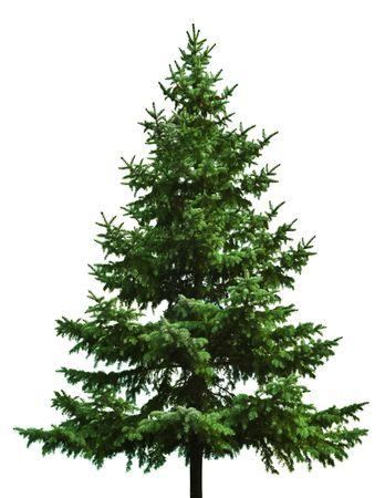 the pine tree: El desnudo �rbol de Navidad listo para decorar