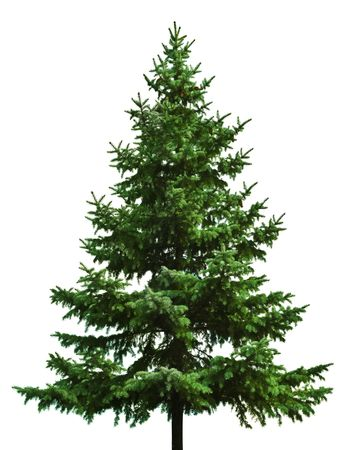 tree decorations: The Bare Christmas tree ready to decorate Stock Photo