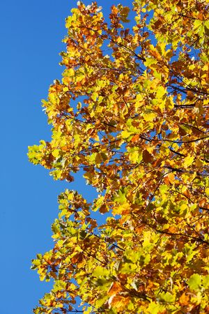 autumn background with colored leaves on sky photo