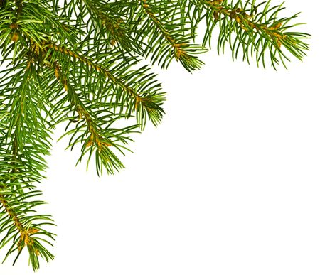 Close up view of the Christmas tree isolated on white photo