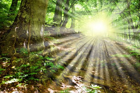 which: Sun beams and  mountain road which was surrounded in the fresh green   Stock Photo