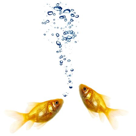 crowd tail: Isolated of the gold fish on white