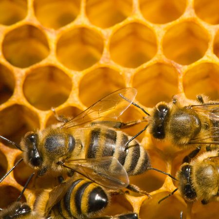 Close up view of the bees on honey Stock Photo - 4020481