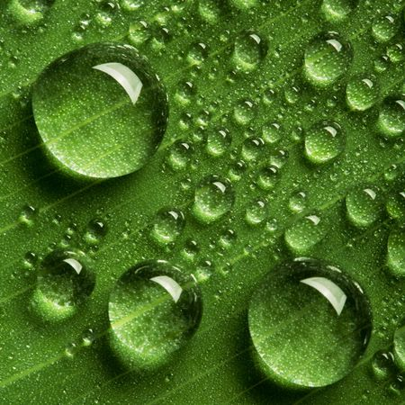 dew drop: Close up view of the water drops background