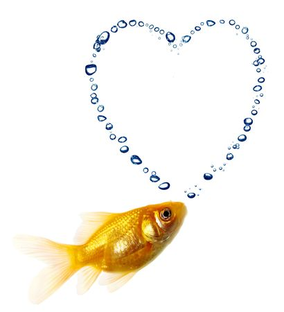 Isolated of the gold fish on white photo