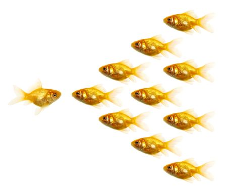 Isolated of the gold fish on white Stock Photo - 4237806