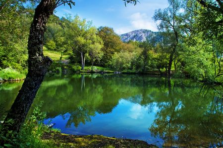 green forest on the mountain Demerdji, Crimea, Ukraine