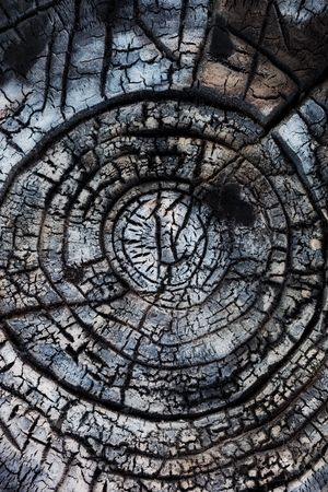 Abstract background. Close-up of burned wood. photo