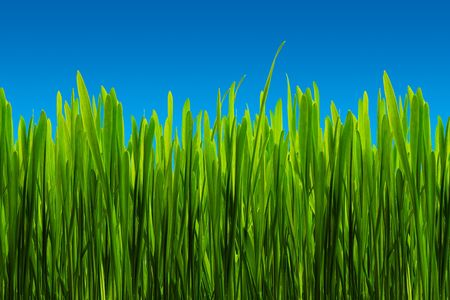 Close up view of the grass background photo