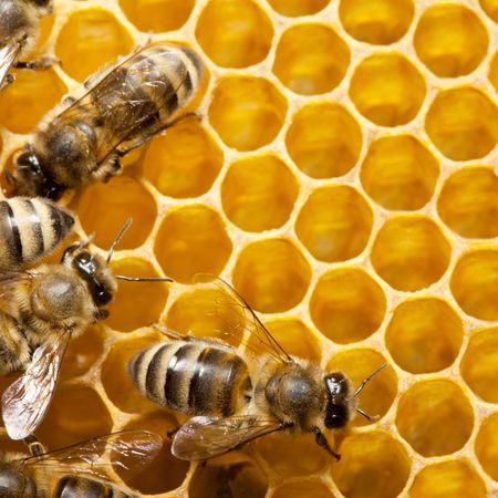 honey cell: Macro of working bee on honeycells. Stock Photo