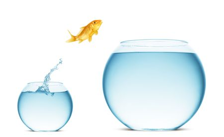 A goldfish jumping out of the water to escape to freedom. White background. Stock Photo - 5403129