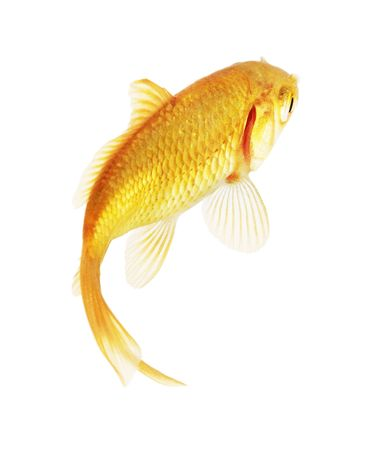 gold fish isolated on white Stock Photo - 5403096
