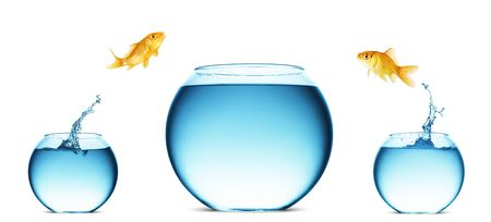 bowl water: A goldfish jumping out of the water to escape to freedom. White background.