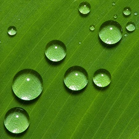 Dew on green leaf with drops of water photo