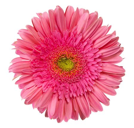 close up view of the pink daisy photo