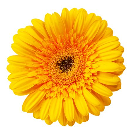 close up view of the yellow daisy photo