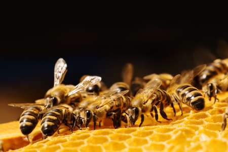 abejas: Cierre de vista de las abejas que trabajan en honeycells.