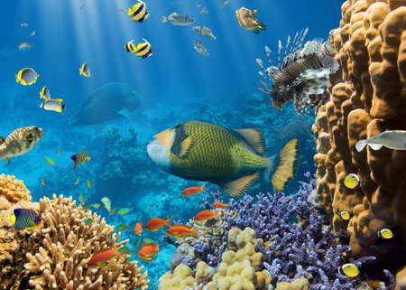 peces de acuario: Coral y pescados en el Sea.Egypt Red