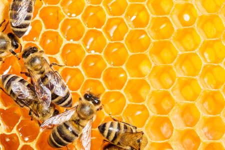 miel de abeja: Cierre de vista de las abejas que trabajan en honeycells