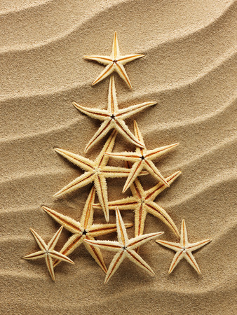 tropical christmas: Christmass tree from shells on sand background