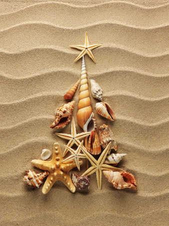 Christmass tree from shells on sand background photo
