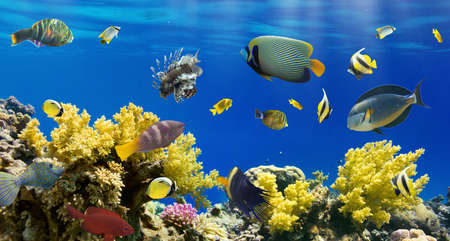 reef fish: Coral and fish in the Red Sea.Egypt Stock Photo