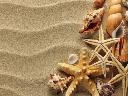 starfish beach: sea shells with sand as background Stock Photo