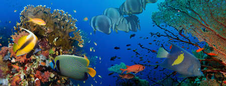 coral sea: Coral and fish in the Red Sea.Egypt Stock Photo