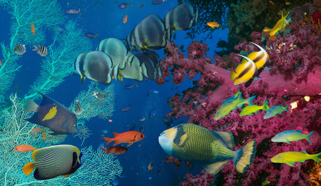 barrier: Coral and fish in the Red Sea.Egypt Stock Photo