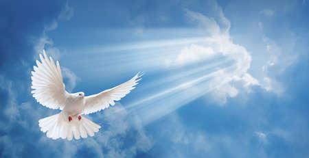 palomas volando: Paloma en el aire con las alas abiertas de ancho en frente del sol