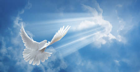 dove of peace: Dove in the air with wings wide open in-front of the sun