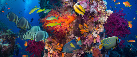 colorful fish: Coral and fish in the Red Sea.Egypt Stock Photo
