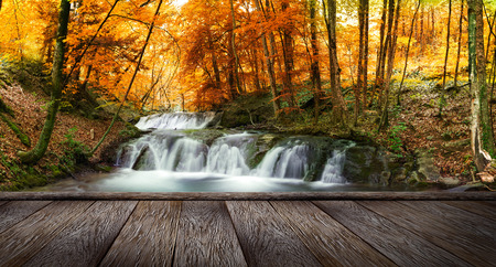 yellow trees: Autumn creek woods with yellow trees foliage and rocks in forest mountain and wood pier