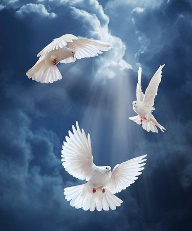 paloma: Paloma en el aire con las alas abiertas de ancho en frente del sol