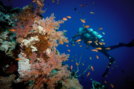 Scuba Diver, Tropical Fish and Coral Reef on Red Sea photo