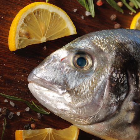 dorado fish: Raw dorado fish with rosemary and sea salt server on old wooden table.