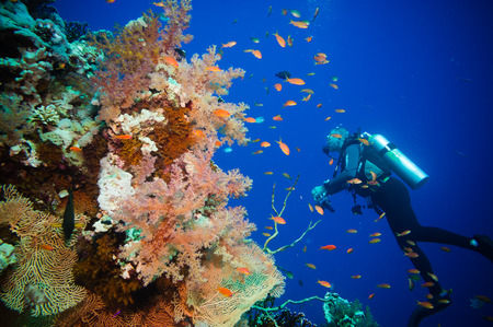 polyps: Scuba Diver, Tropical Fish and Coral Reef on Red Sea