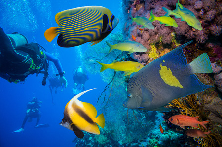 Tropical Fish and Coral Reef on Red Sea photo