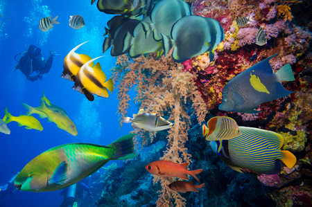 gorgonian sea fan: Tropical Fish and Coral Reef on Red Sea