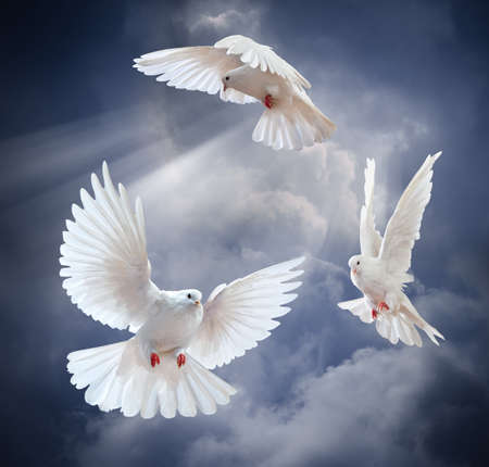 doves: Dove in the air with wings wide open in-front of the sun