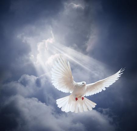 simbolo della pace: Colomba in aria con le ali aperte in-anteriore del sole  Archivio Fotografico