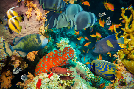 gorgonian: Tropical Fish and Coral Reef on Red Sea