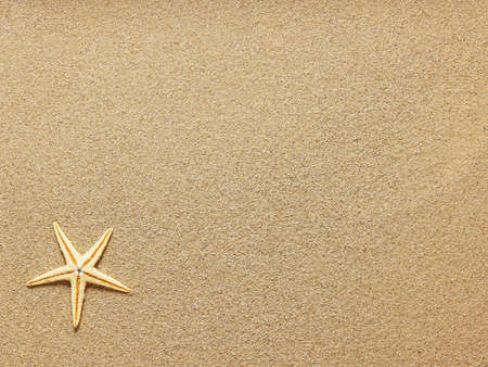 Starfish on Beach Sand. Close up Stock Photo