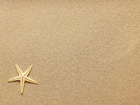 etoile de mer: Starfish sur la plage de sable. Fermer