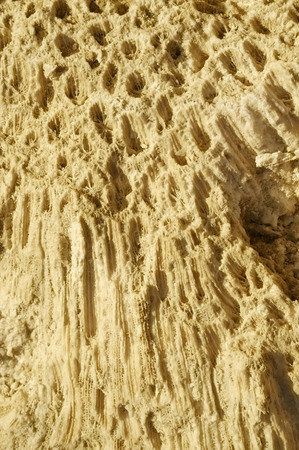 formed: Texture formed by the corals in coastal limestone. Close up